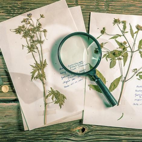 Lupe liegt auf alten Kräuter-Notizen