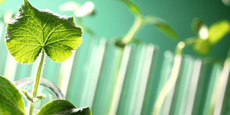 Pflanze im Reagenzglas
